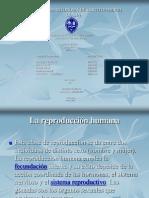 Reproduccion Humana Ovogenesis y Espermatogenesis_Harold Castillo