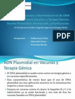 Producción de plásmidos adn