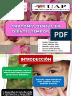 anatomadentalendientestemporales-121201150739-phpapp02