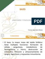 BazoAnatomia y Fisiologia