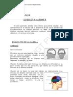 Anexo - Dossier Anatomi