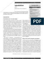 Nucleotide Degradation.pdf