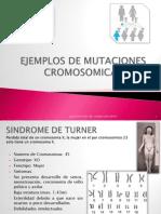 MUTACIONES CROMOSOMICAS 2