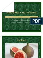 Growing Figs in the Lowcountry Presentation 2013-01-20