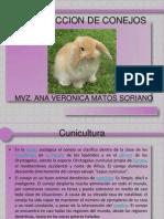 Produccion de Conejos11