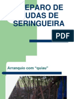 13610158 Preparo de Mudas de Seringueira