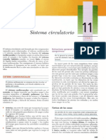 Cap 11 - Sistema Circulatorio