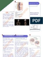 Leaflet Hidrosephalus