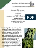 Bioinsecticidas Final