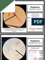 Parasitology (Laboratory) - NEMATODES - Hookworms