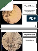 Parasitology (Laboratory) - NEMATODES - Mistaken Stuff