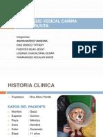 Caninos Caso Clinico Diapos