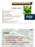 Potential of Jatropha Curcas