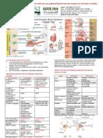 Brain Anatomy Function Cheat Sheet | Central Nervous System | Brain