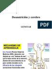 23829701 Desnutricion y Cerebro