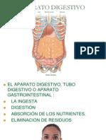Aparato Digestivo Parte 1