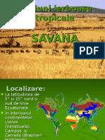 ecosistemele savanelor