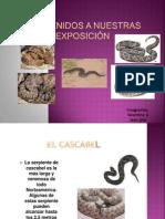 Presentación1 VALENTINA ESCUELA PEDRO CASTILLO