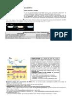 transcripcinytraduccin-100308034330-phpapp02
