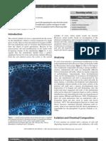 Endodermis.pdf