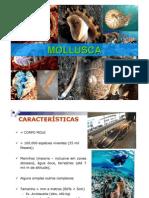 Aula 4 - Mollusca 2013 1
