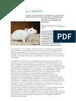 OMGs Ratas y Tumores