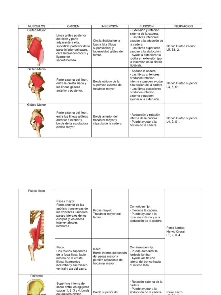 Origenes e Inserciones MMII
