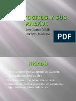Hepatocitos y Sus Anexos