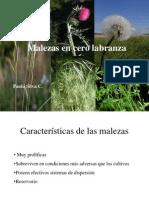 2012 Clase 15 Malezas y Su Control en Cero Labranza