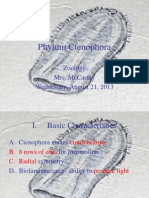 Phylum Ctenophora 1