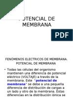 Potencial de Membrana.ppt