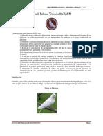 Manual de Especialidades i. a.
