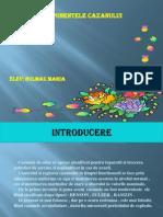 Componentele Cazanului Prezentare in Ppt