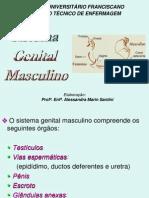Anatomia Masculino[1] Unifra