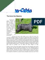 Terrierul de Boemia-Ziua Europei(Cehia)