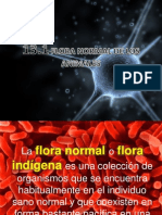 13. Flora Normal de Los Animales