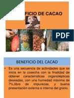 Beneficio de Cacao - 2011