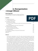 Chromatin Reorganization Through Mitosis