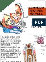 Pulpa Dental Exposicion