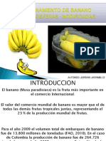 Atmosfera Modificada en Banano Diapositivas Inteligencia Artificial