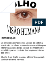 Olho e Visao Humana