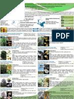 Especies Forestales de interés apícola en colombia