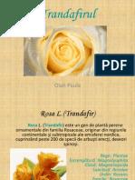 Cristina Si Paula