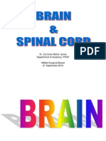 Brain & Spinal Cord