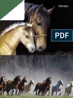- Horses (FP)