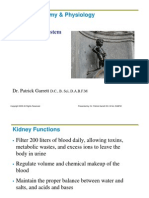 The Urinary System.pdf
