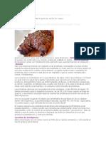 Consecuencias de Obtener tus Proteínas Consumiendo Carne