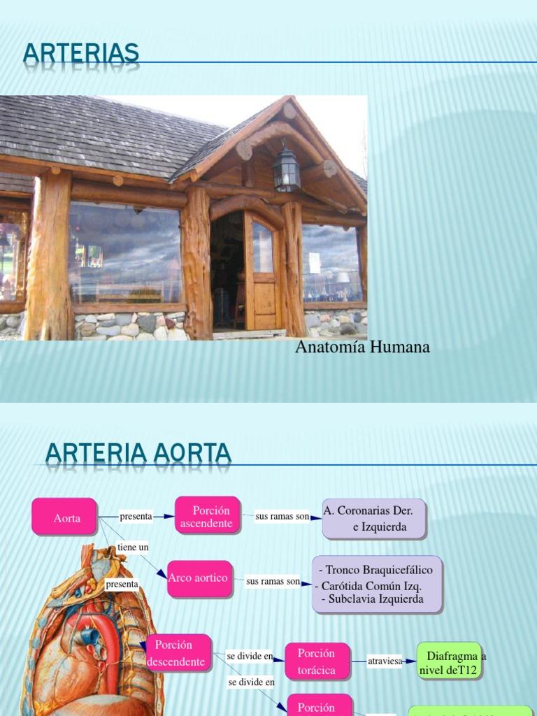 Aorta y Sus Ramas