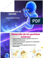 Vagina Embriologia