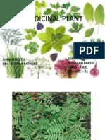 Medicinal Plant ( Rahul Sharma ) Chamba